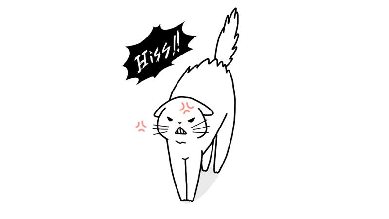 怒っている猫のイラストアイキャッチ